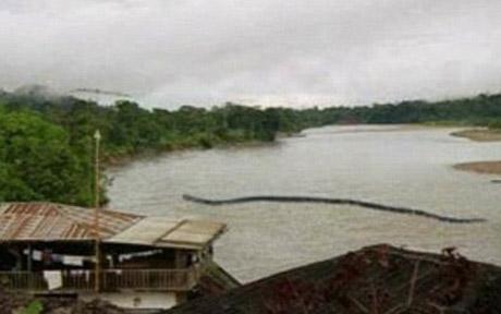 Borneo's Giant Snakes