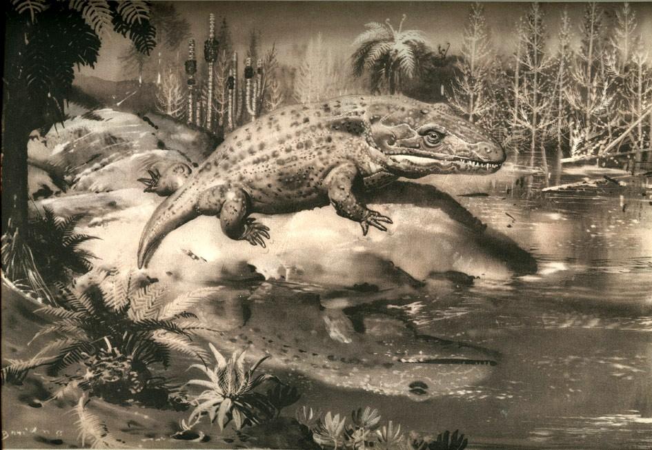 Crocodile Frog