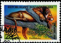 Malagasy1187Pantheraleo32195.jpg