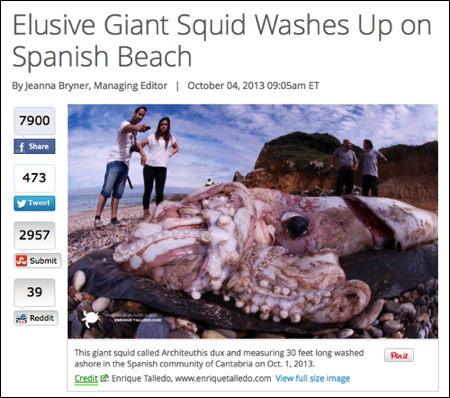Spainsquid.jpg