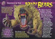 Nandi Bears front