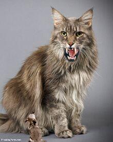 Monster-Cat--29537.jpg