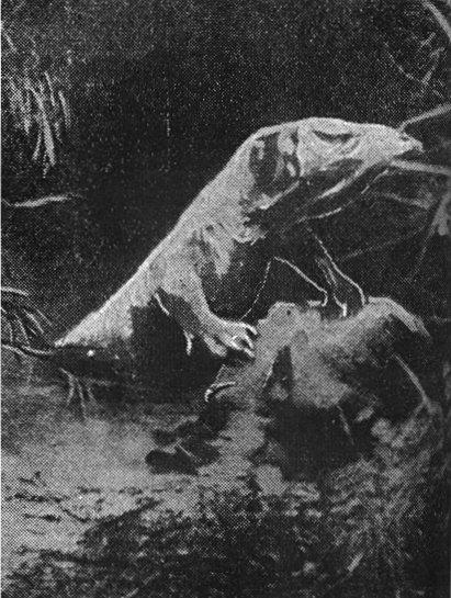 Kasai Rex