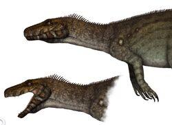 Herrerasaurus.jpg