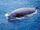 Ziphius (Cuvier's Beaked Whale)