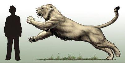 Buffalo-Lion (Crypid).jpg