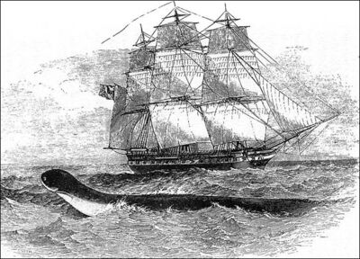 Hms-daedalus-sea-serpent.jpg