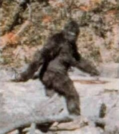 Patterson–Gimlin Footage