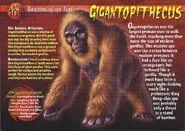 Gigantopithecus front