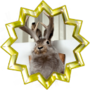 Seal of Approval From Cute Jackalope