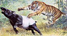 Tigre0.jpg