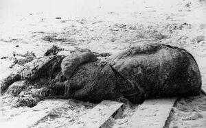 St augustine carcass lusca.jpg