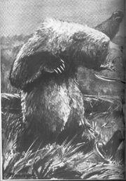 Bearcover1.jpg
