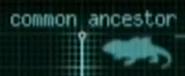 Dragon's common ancestor