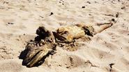Esathaven Sea Serpent