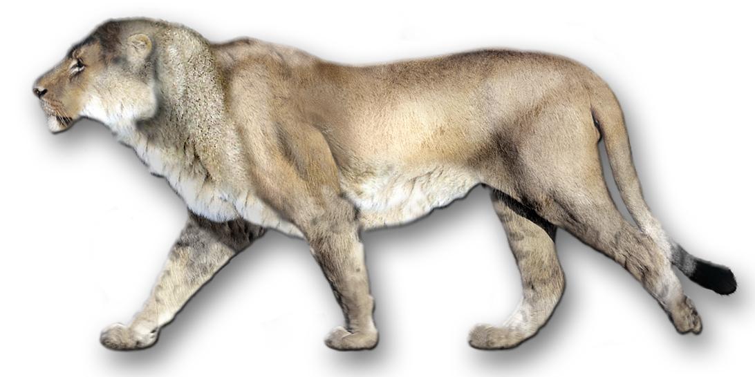 American Lions