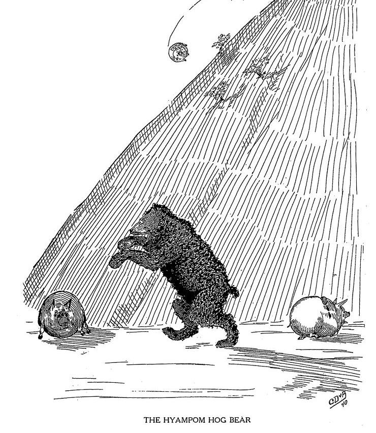 Hyampom Hog Bear