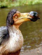 Птица-додо