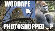 PROOF Ranchita Woodape Photo WAS NOT Photoshopped - (ThinkerThunker)