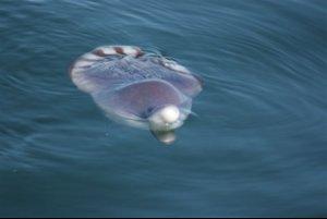 Dolphin 1 animal