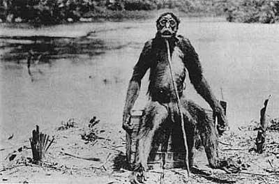 Dey Loy's Ape