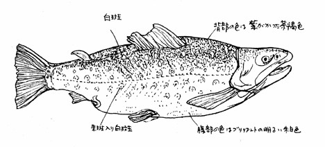Takitaro
