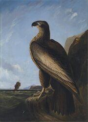 Washington's Eagle.jpg