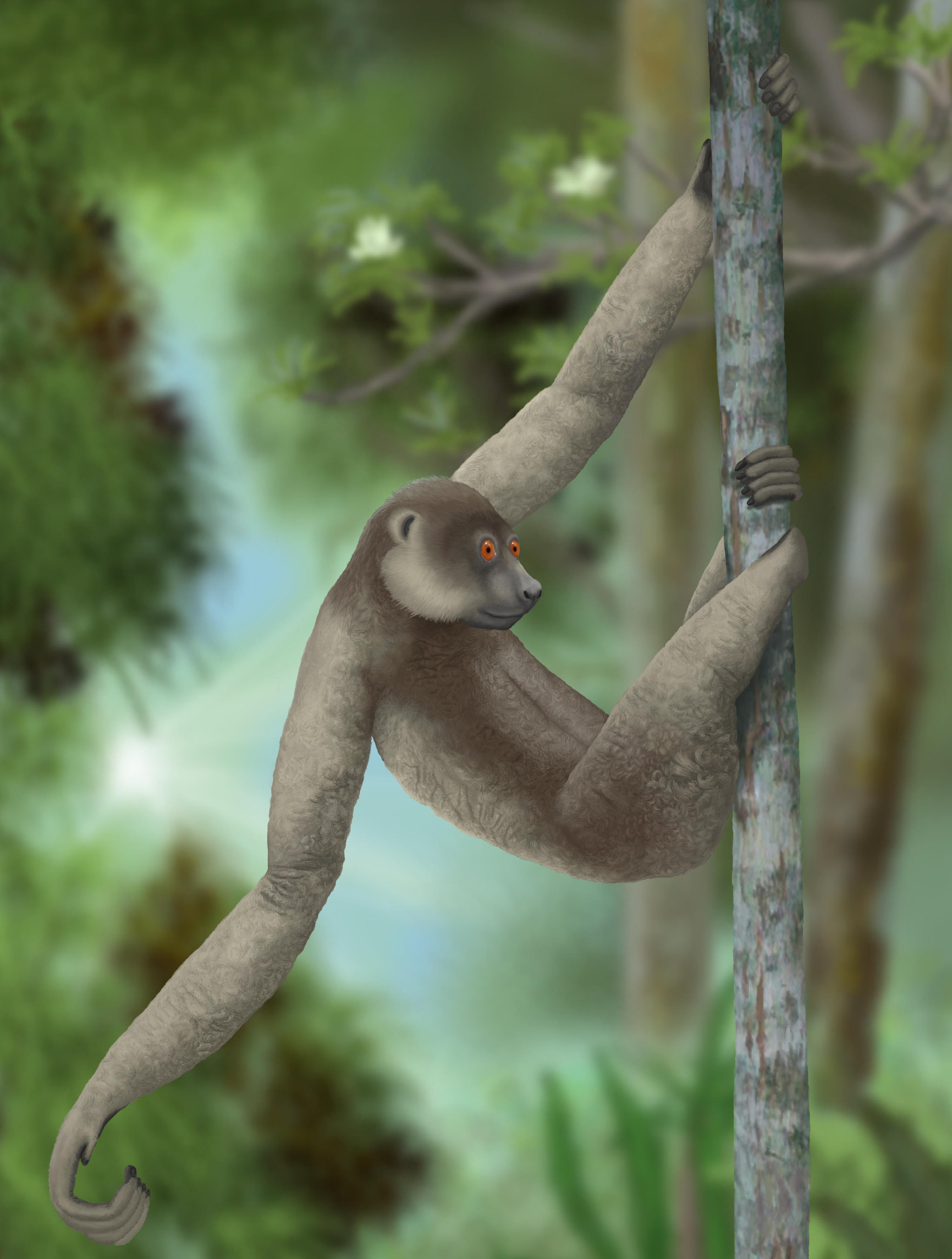 Giant lemurs