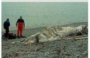 Newfoundland Blob