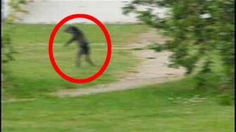New_Unexplained_Cryptid_Vlogs_Coming!-0
