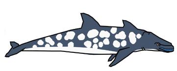 Rhinoceros dolphinn.png