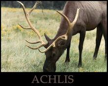 ACHLIS.jpg