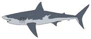 Carcharodon Megalodon (Illustration)