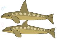 Alula Killer Whale