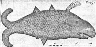 Mongitore's Monstrous Fish
