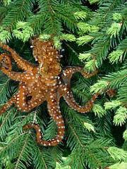 Tree Octopus.jpg