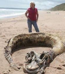 Aberdeen Carcass.jpg