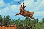 Jackalope in the wild large