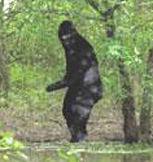 Bigfoot2.jpg
