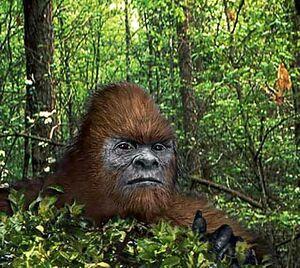 Jungle-bigfoot.jpg