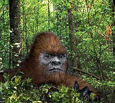 South American Bigfoot