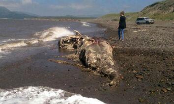 Sea-creature-in-Russia-310798.jpg