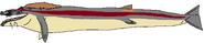 Cadborosaurus willsi