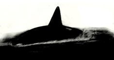 Alula Whale.png