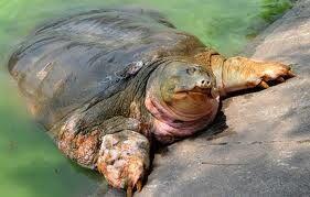 Legendary turtle sunbathes.jpg
