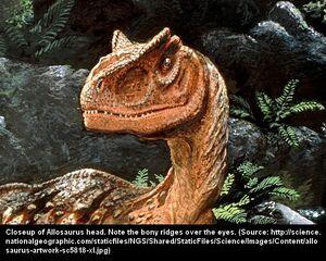 Allosaurus6.jpg