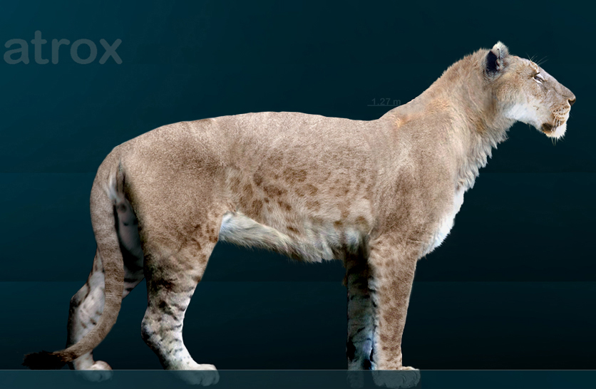 Maned American Lion