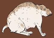 Fatdog.png