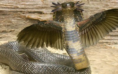 Winged cobra by dragonfly929-d33rh66.png