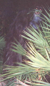 Skunk Ape.png